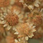 Mini Flowers by Yauya
