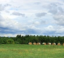 Rolling in the hay by Michele Simon