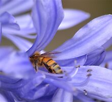 Bumble bee delight by Phrancis Whiteley