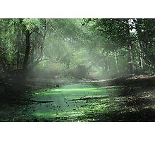 Morning Bog Photographic Print