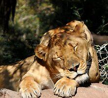 Sleeping Beauty  by Saija  Lehtonen