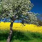 Spring Colors by Walter Quirtmair