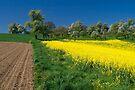 Spring Fields by Walter Quirtmair