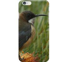 Nectar Feeder iPhone Case/Skin