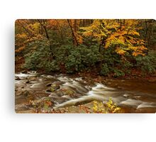 Laurel Creek Canvas Print