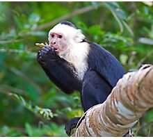 Special White-faced Capuchin Photographic Print