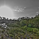 Mangrove Sunset HDR by Jayson Gaskell