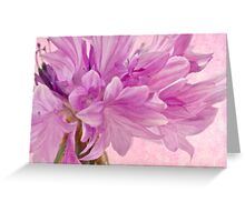 Pink Batchelor's Button Macro Greeting Card