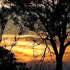 tree at sunset by mhall