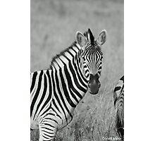 Stripes Photographic Print