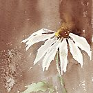 Sepia Daisy by Maree Clarkson