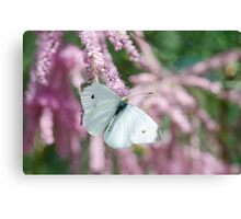The White One  Canvas Print