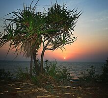 sunset palm by mhall