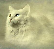 Seeing the world through her eyes by Scott Mitchell