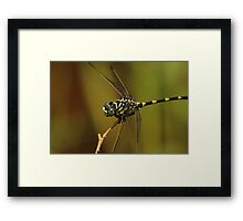 Green and Yellow Dragonfly Framed Print