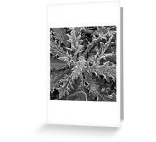 Frost #2 Greeting Card