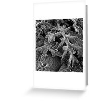 Frost #4 Greeting Card