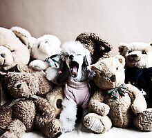 Teddy Collection by Cristina Rossi