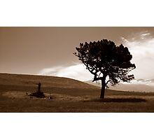 Regeneration Photographic Print
