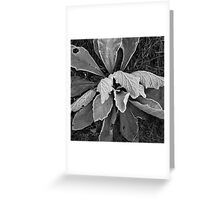 Frost #11 Greeting Card