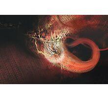 Lamprey Photographic Print