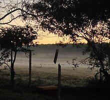 Morning comes by mbaialardi