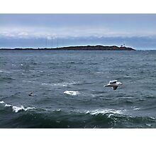 Trial Island and Seabirds Photographic Print