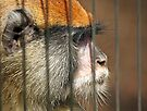 The Face of Captivity by CarolM