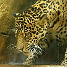 Jaguar Bathing by kellimays