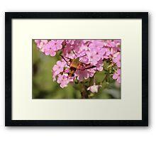 Hummingbird Moth Wings Framed Print