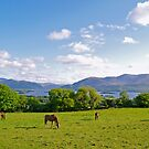 Springtime in County Kerry by Alex Cassels