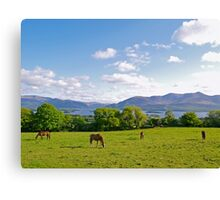 Springtime in County Kerry Canvas Print