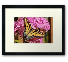 Swallowtail Butterfly and Flower Framed Print