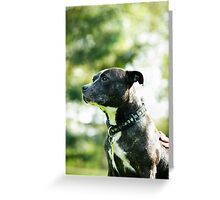 Staffie Love Greeting Card