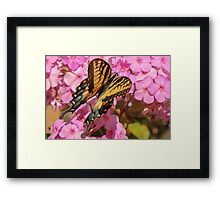 Swallowtail and Closed Wings Framed Print