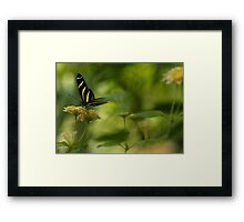 """Gliding in Pure Bliss-Conservatory Butterfly"" Framed Print"