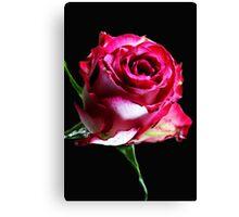 Neon Pink Rose Canvas Print