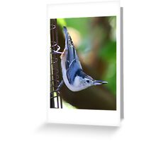 Got It!! White-breasted Nuthatch with Sunflower Seed Greeting Card