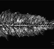Silver Leaf  by linmarie