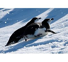 Chinstrap penguins toboggan across the snow in Antarctica Photographic Print