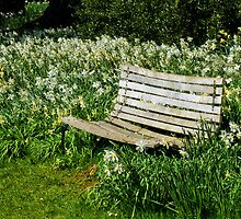 Come Rest Amidst The Daffodils  by Susie Peek
