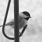 Cheeky Chickadee 9 by WalnutHill