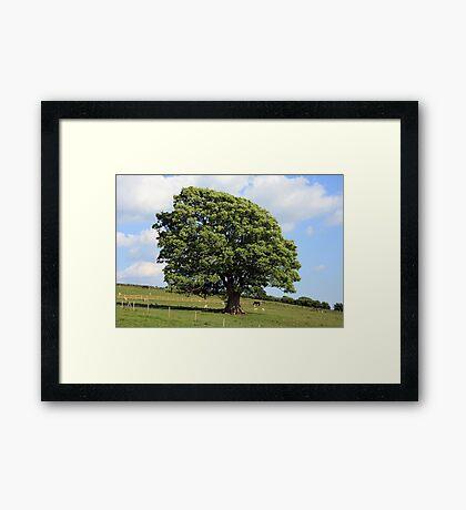 Oak Tree in a Field Framed Print
