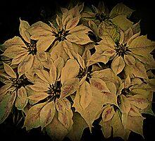 Poinsettia by Rachel Williams