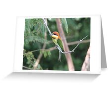 Chestnut-headed Bee-eater Greeting Card