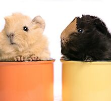 Babys guineapigs by mirenar