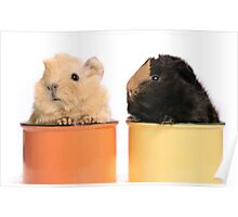Babys guineapigs Poster