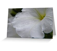 Dew on white flowers Greeting Card