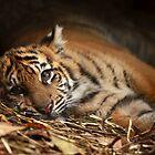 Baby Tiger - Model by Daniela Pintimalli