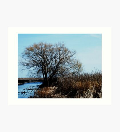 Point Pelee, Ontario Art Print